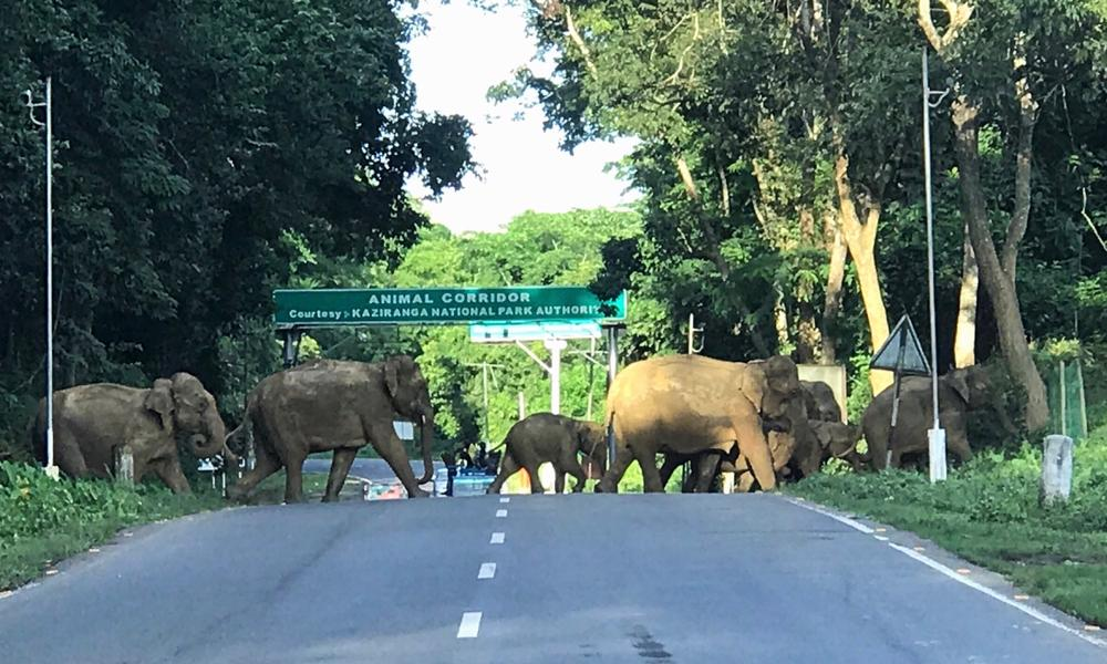 The right to roam: elephant encounters at a wildlife corridor