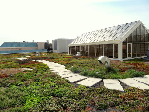 Green roof at WWF headquarters, Washington D.C.