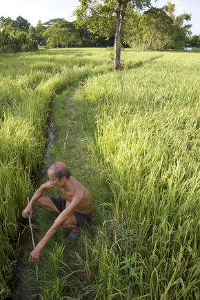 Agricultural Practices in the Greater Mekong
