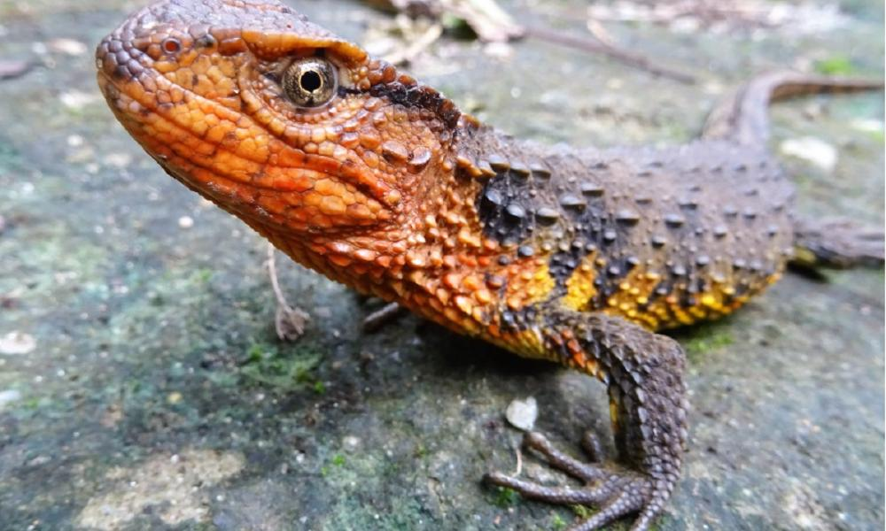 New species discovered in the Greater Mekong