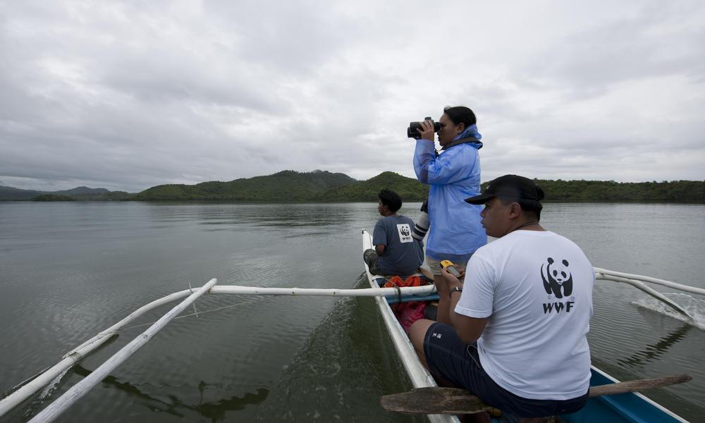 Irrawaddy Dolphin
