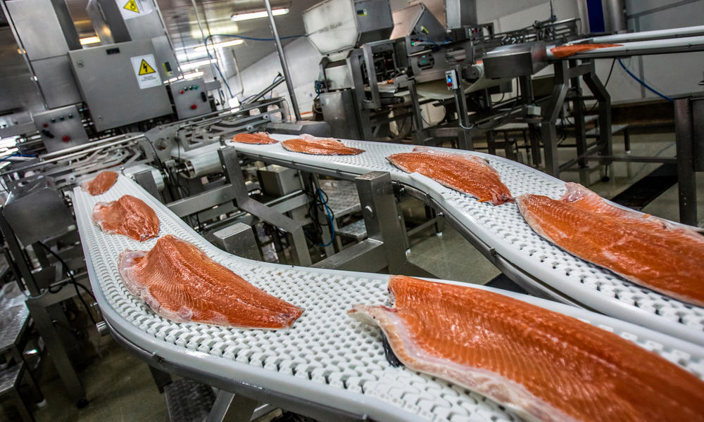 Today, Tomorrow and Beyond: Experts Chart the Future of Aquaculture