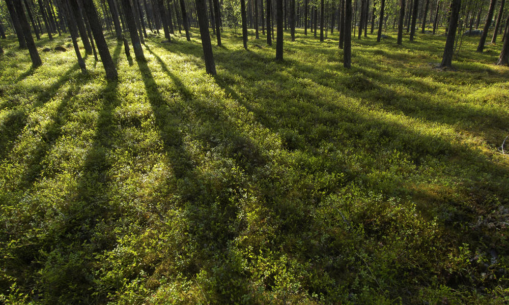 What's a boreal forest? And the three other types of forests around the world