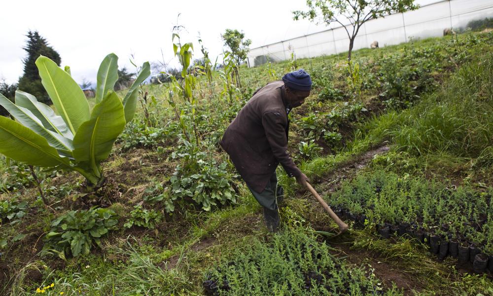 Jordbruket vil ødelegge Jorda om vi fortsetter
