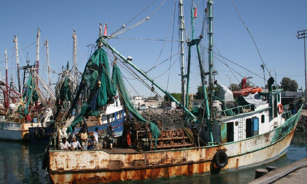 Shrimp fishery, Mexico