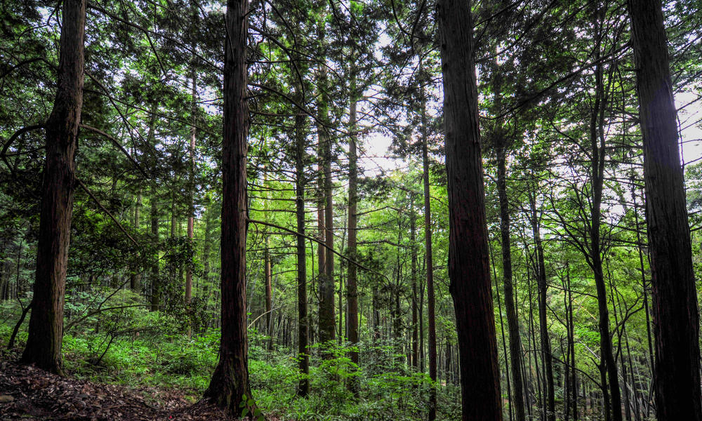 WWF and Apple help improve management of more than 1 million acres of China's forests
