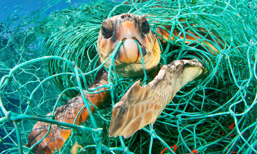 Plastics | Initiatives | WWF