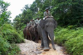 Asian Elephant Reducing Human Elephant Conflict