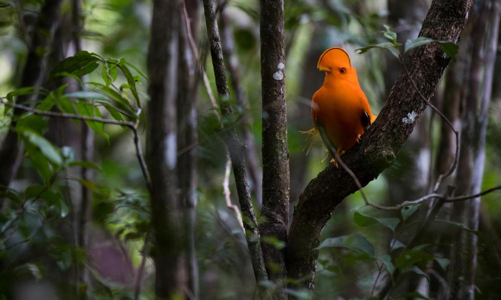 Forest wildlife populations decline 53% since 1970
