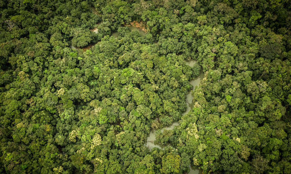 3 ways you can help protect the Amazon