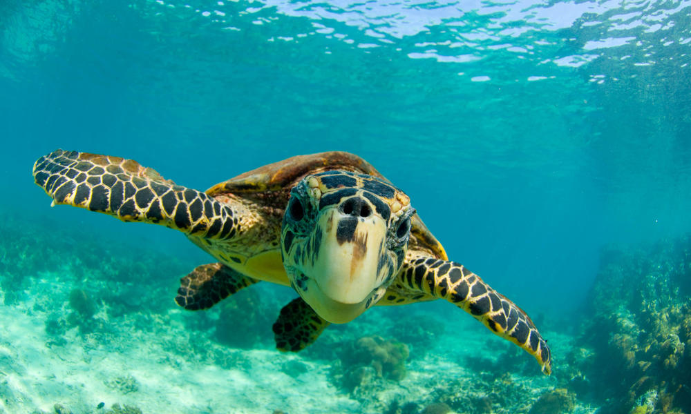 Turtles, tigers, and more species receive additional protections at global wildlife meeting