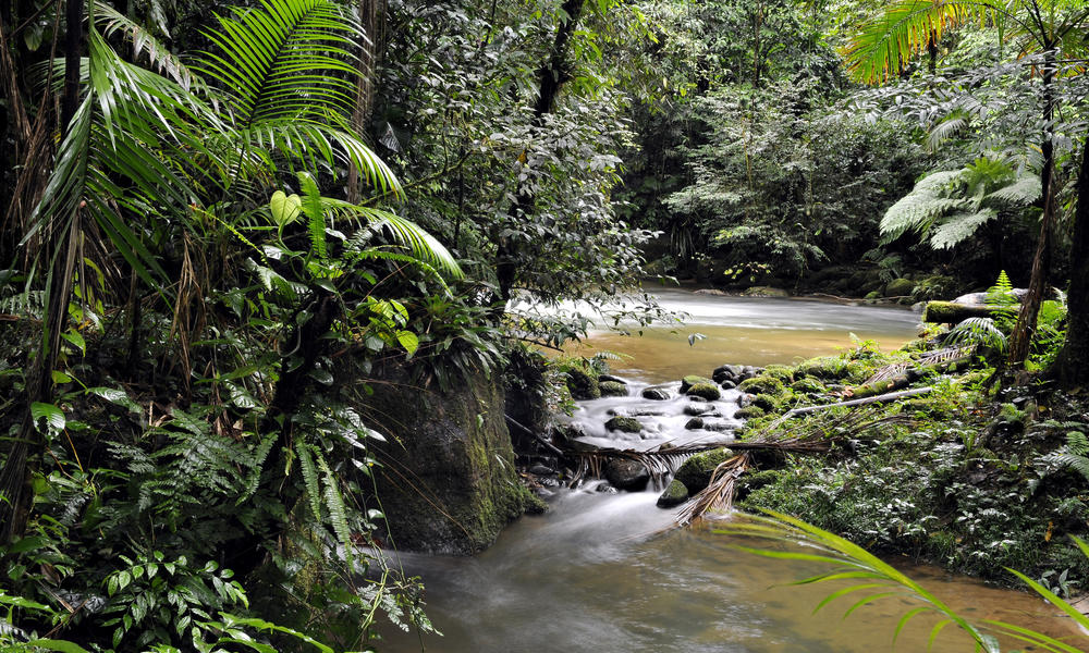 Collaborating to Conserve Forests: HP and WWF Project Goes Beyond Responsible Sourcing Toward a Healthier Planet