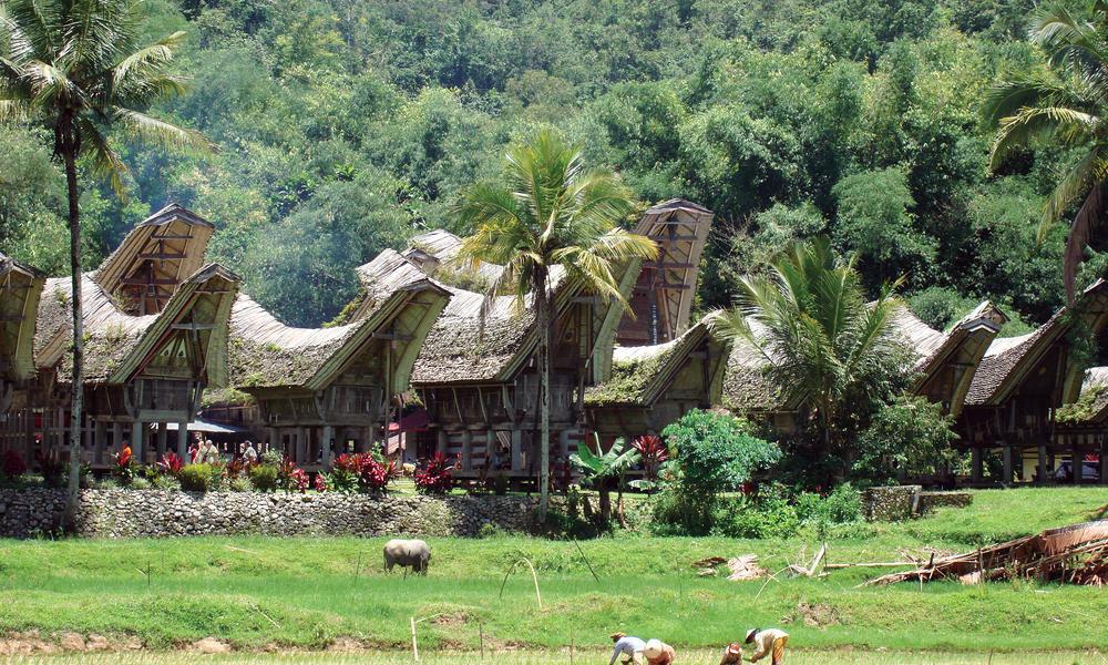 Tana Toraja Indonesia  City pictures : TANA TORAJA