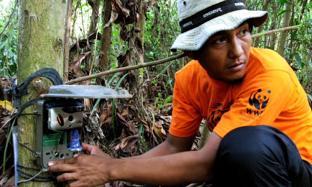 Installing camera trap in Tesso Nilo national park