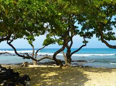 Mangrove trees %28c%29 gaby gollub