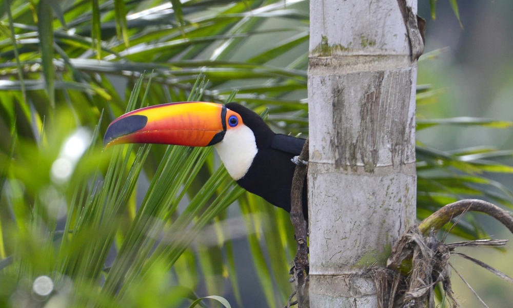 What is the Atlantic Forest and why do we need to save it?   Stories   WWF