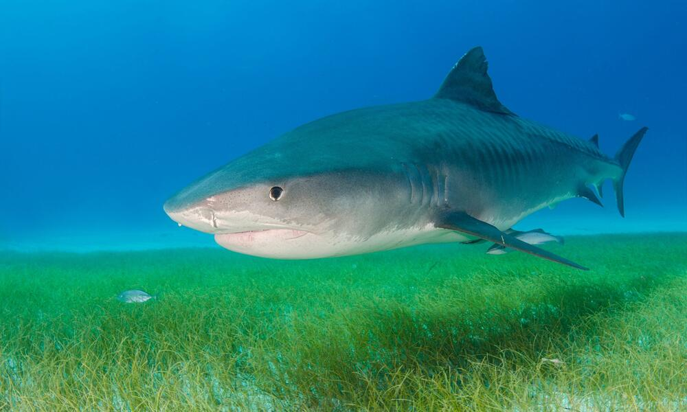 Five ways sharks and rays help the world