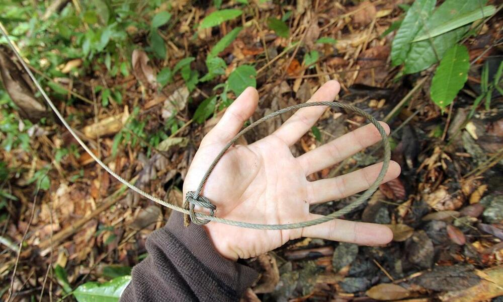 Staggering Number of Snares Threaten Wildlife in Southeast Asia