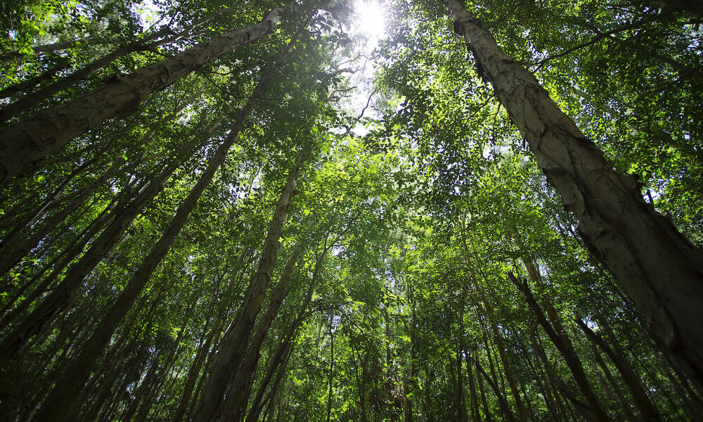 WWF Statement on The Tropical Forest and Coral Reef Conservation Reauthorization Act