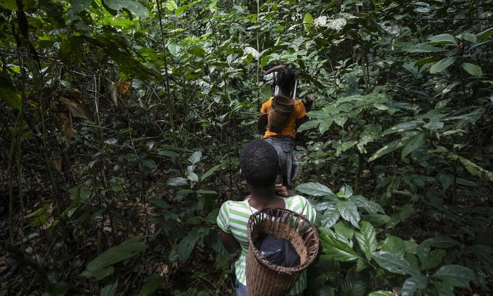 COVID & the Ba'Aka Tribe of Dzanga-Sangha   Stories   WWF