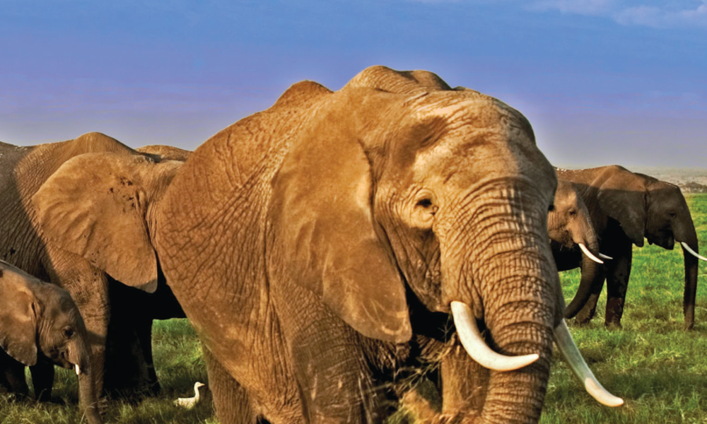 CITES, WWF and TRAFFIC Release New Guide to Identify Smuggled Ivory
