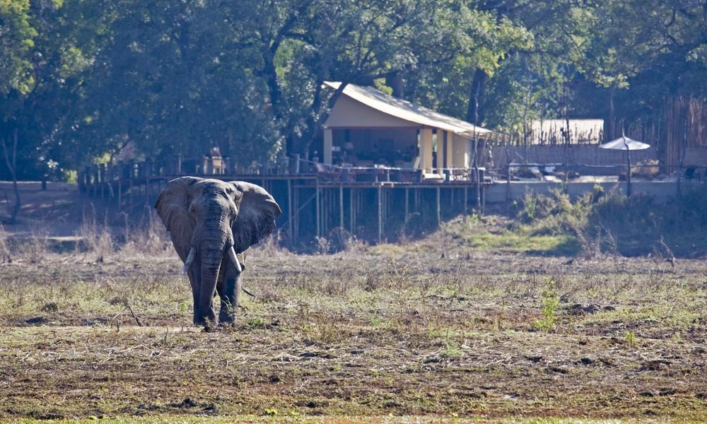 Elephant at Kalamu