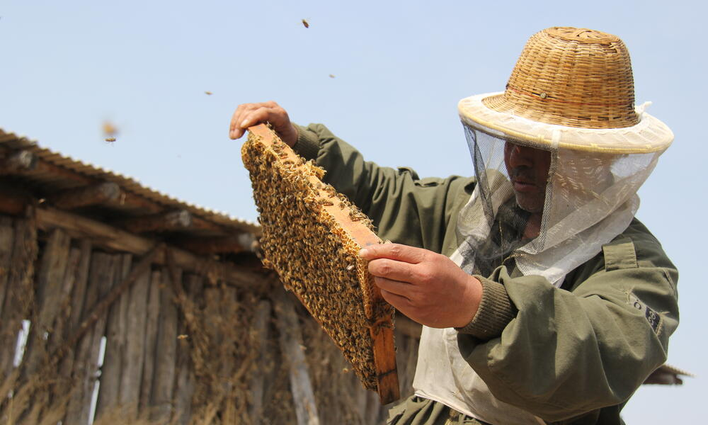 How honey can help protect tigers in China