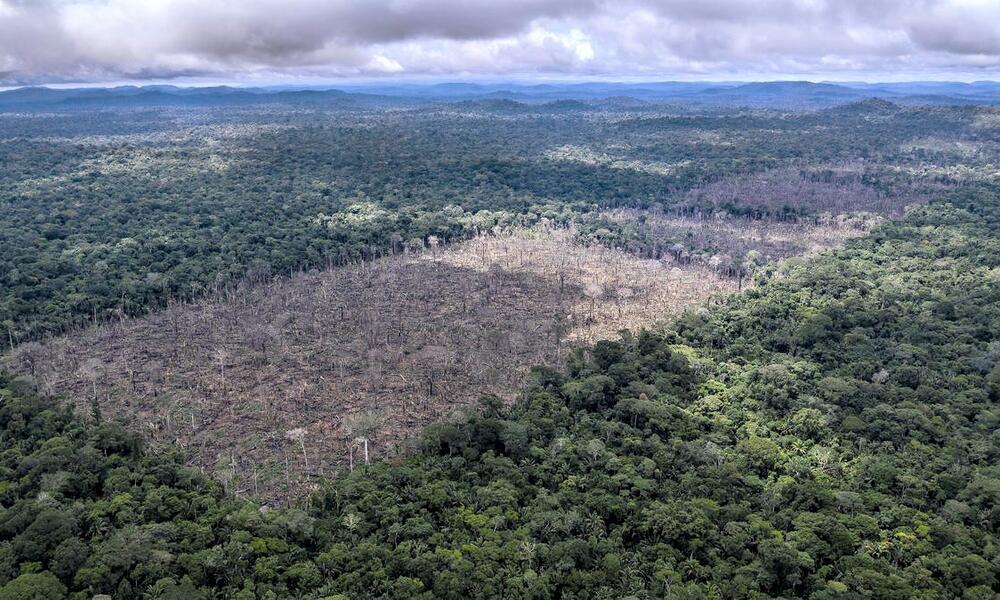 Deforestation fronts | Stories | WWF