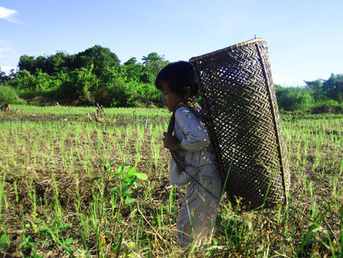Shoulder baskets are used to carry forest and farming products.