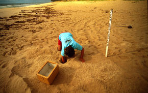 biologist collecting turtle eggs