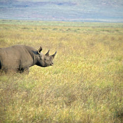 Black rhino 08.23.2012 help