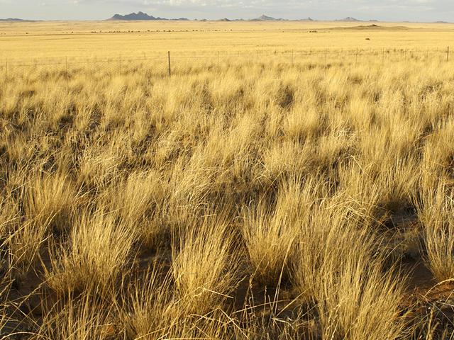 Comanche National Grassland, Colorado. Color Landscape