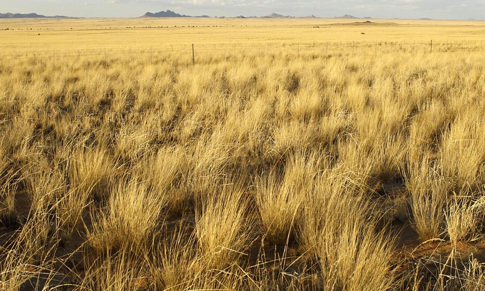 Natural Resources Found In The African Savanna