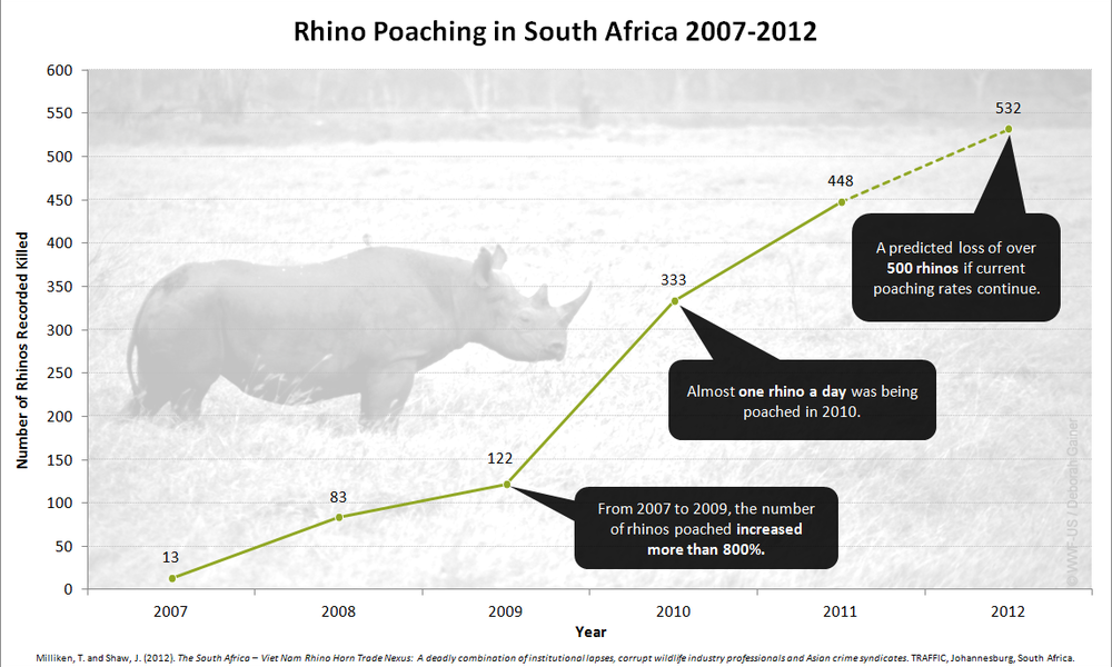 Rhino-poaching-graph