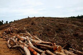 deforestation_sumatra_GPN247796_threats