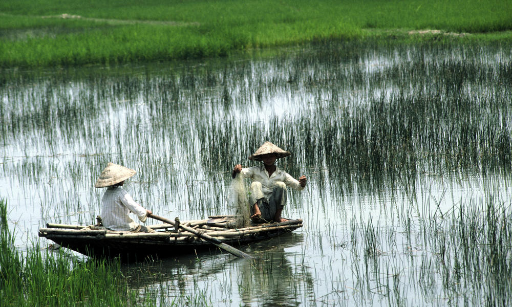 Fishing in Rice Paddy in Vietnam