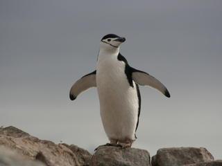 Penguin_Circle