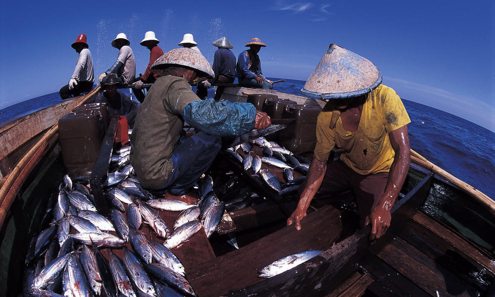 Fishermen sorting tuna in Indonesia