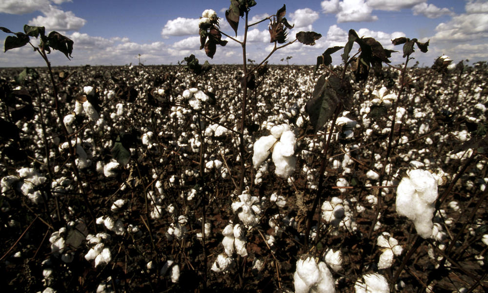 The Impact Of A Cotton T Shirt Stories Wwf