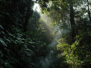 Tropical forest in Sumatra