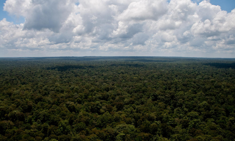 An aerial view of the Eastern Plains Landscape—a vast wilderness of deciduous forests spanning eastern Cambodia into southwestern Vietnam. These seasonally flooded forests, home to the indigenous Phnong ethnic communities, are one of the last refuges for