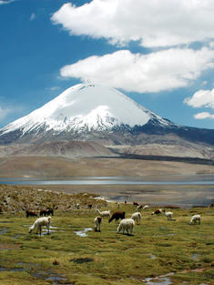 Lauca_National_Park