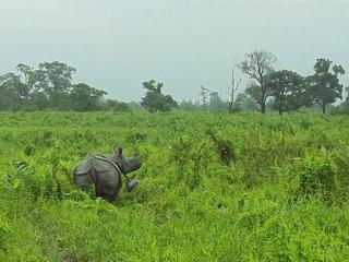 Rhino and calf Manas