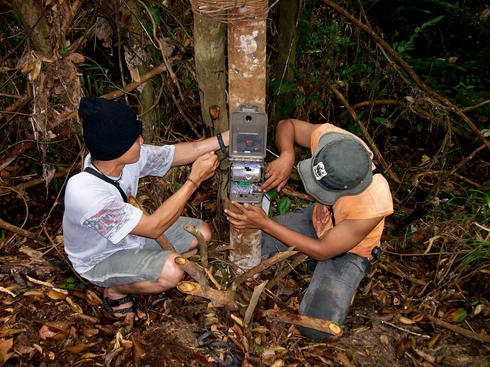 Installing camera trap in Tesso Nilo national park, Riau Province, Indonesia