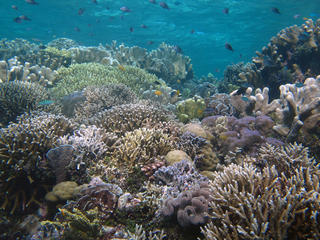 coral reef