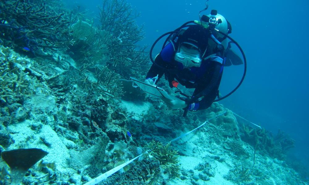 Helen Fox diving