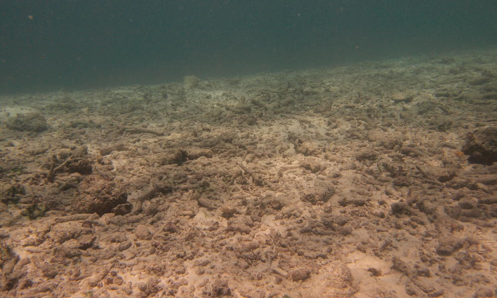 reef rubble