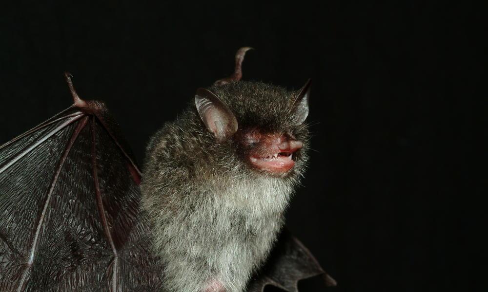 Beelzebub's bat