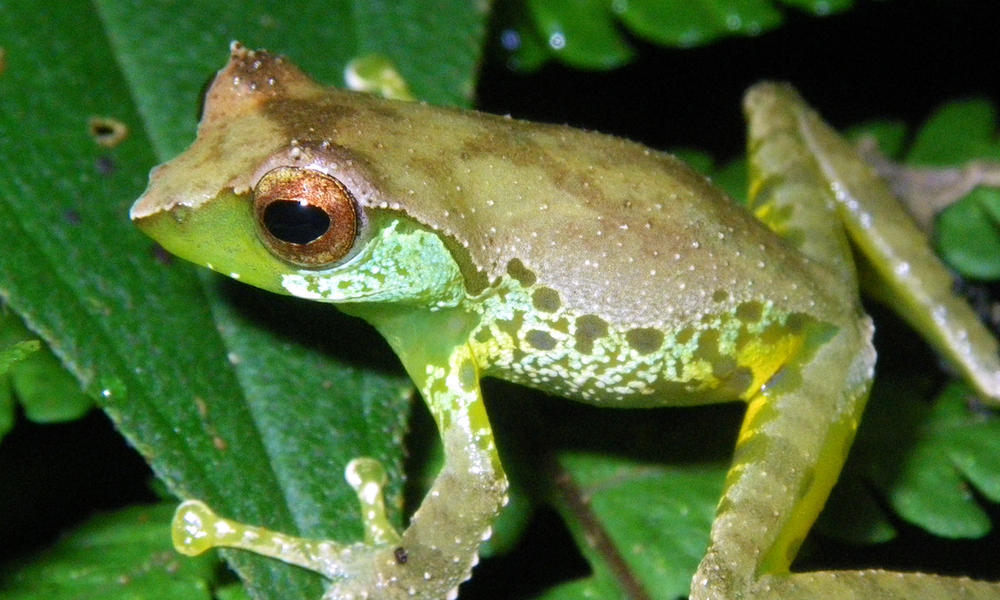 sweet frog car tuning