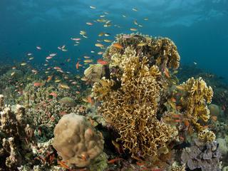 Philippines_biodiversity_hot_spot_travel_blog